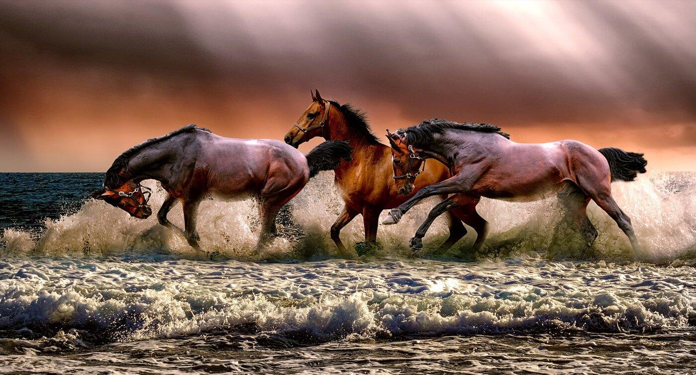 Hevosista ja ratsastamisesta